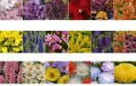 Какие клумбы лучше создавать из однолетних цветов