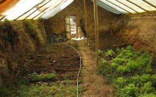 Выращиваем зелень в теплице зимой