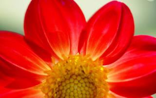 Какие цветы подходят
