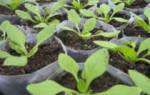 Секреты садоводства подкормка петуний