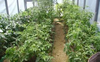Низкорослые помидоры лучшие сорта для теплиц