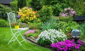 Как красиво рассадить цветы на участке фото