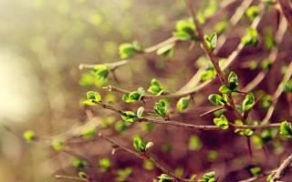 Особенности вегетации и преимущества однолетних видов