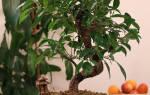 Какие растения увлажняют воздух в квартире