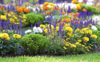 Клубневые многолетние цветы