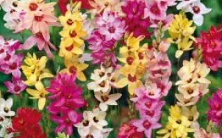 Какие цветы надо выкапывать