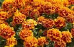 Зачем сажать цветы под зиму