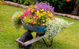Как создать клумбу из цветов