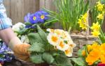 Первые цветы на приусадебном участке
