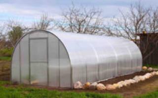 Подготовка почвы ивысадка рассады огурцов втеплицу