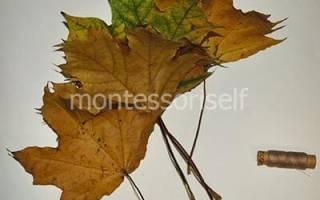 Как сделать цветы из кленовых листьев поэтапно
