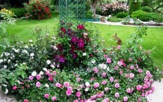 Почвопокровные розы подготовка к зиме