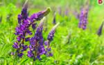 Самые неприхотливые цветы для весны