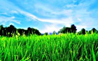 Какие бывают травянистые растения