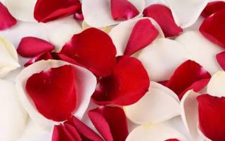 Целебные свойства лепестков розы