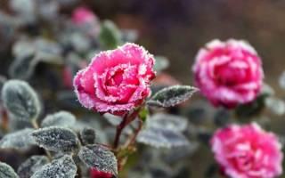 Ткань для укрытия роз на зиму