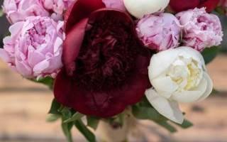 Как возникли тюльпаны похожие на пионы