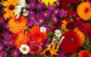 Какие цветы отцветают осенью