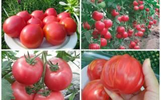 Розовые сорта томатов