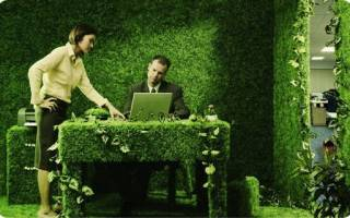 Горшечные растения для офиса