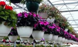 Как построить теплицу для зимнего выращивания культур