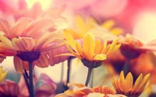 Какие однолетние цветы можно сеять под зиму