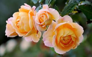 Осенние садовые цветы фото и названия