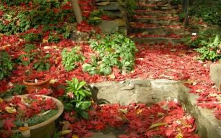 1 место скопления листвы для капризных многолетников