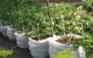 Как вырастить помидоры в мешках в пленочных теплицах