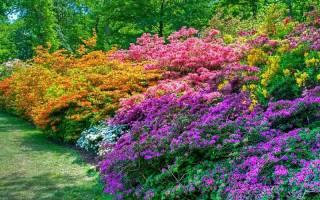 Садовые кустовые цветы фото и названия