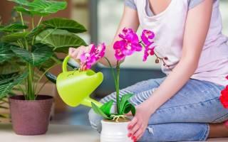 Сколько раз в неделю нужно поливать цветы