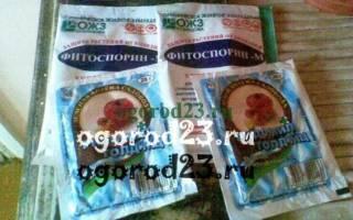 Профилактика фитофтороза томатов