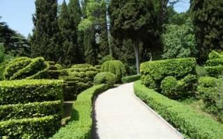 Зеленая изгородь из вечнозеленых растений