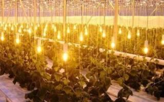 Особенности освещения теплиц