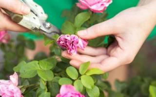 Степени обрезки роз