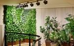 Живая стена из растений в квартире