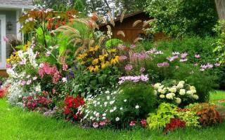 Декоративные растения для сада многолетние