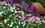 Красивые многолетние цветы для дачи
