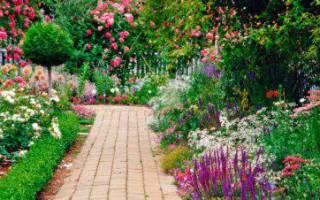 Сад с розовыми цветами не может быть грустным