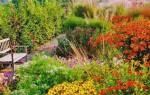 Осенние цветы в саду фото и названия