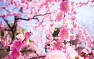 Розовый цветок название