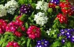 Какие цветы цветут в октябре