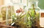 Выращивание карликовых растений в бутылке